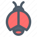 animal, bug, insect, lady bug, spring icon