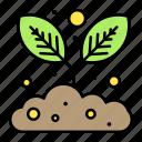 gardening, growing, plant