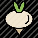 food, spring, turnip, vegetable icon