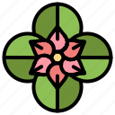 anemone, flower, spring icon