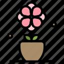 flower, present, spring, tulip icon