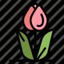 flora, floral, flower, nature, rose