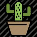 cactos, nature, pot, spring