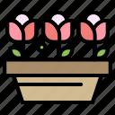 flower, growth, plant, spring
