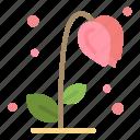 floral, flower, nature, spring, sun