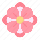 flower, anemone, spring icon