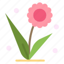 flora, floral, flower, nature, spring icon