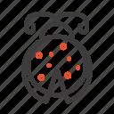 beetle, bug, ladybird, ladybug icon