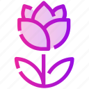 flower, nature, rose, spring icon