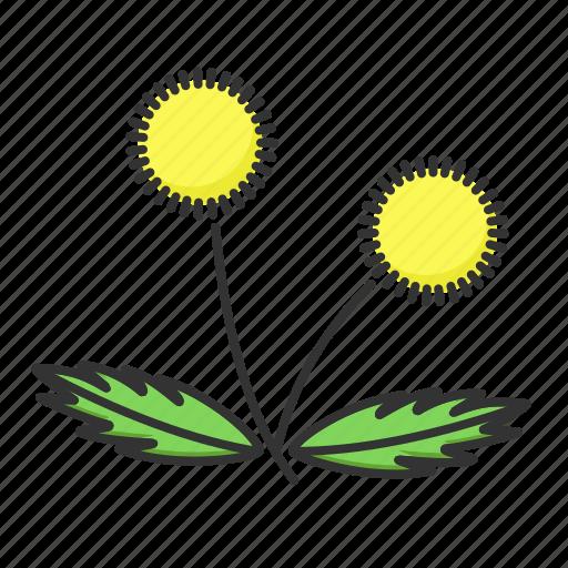 dandelion, nature, plant, spring icon