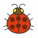 bug, ladybug, nature, spring icon