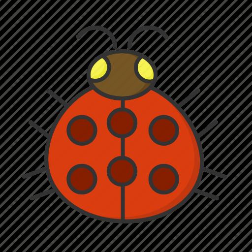 bug, ladybug, nature, spring icon