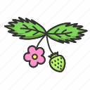 fruit, nature, plant, spring, strawberry icon