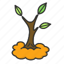 leaf, nature, spring, tree icon