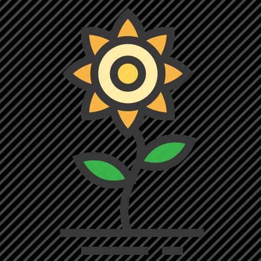 easter, flower, season, spring, sunflower icon