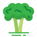 broccoli, easter, farming, plant, season, spring, vegetable