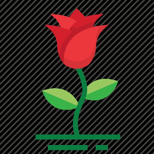 easter, farming, flower, rose, season, spring icon
