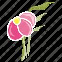 bloom, flower, garden, leaves, spring, plant, ecology