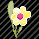 daisy, flower, garden, leaves, spring, nature, environment