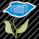 bloom, flower, garden, leaves, rose, spring, ecology