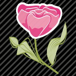 ecology, environment, flower, garden, leaves, rose, spring icon