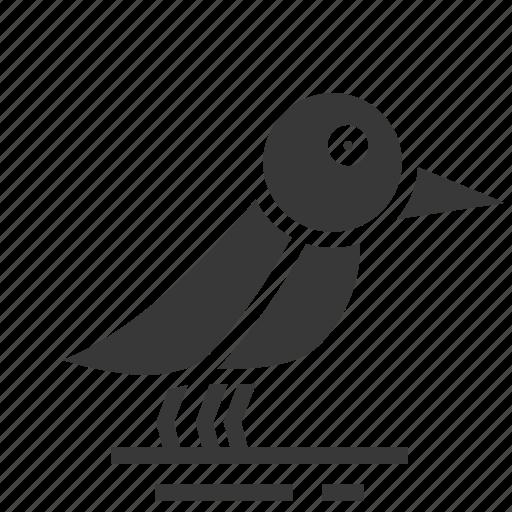 animals, aves, bird, easter, season, spring icon