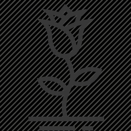 easter, flower, rose, season, spring icon