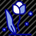 rose, flora, nature, floral, flower