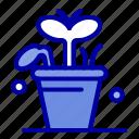 growth, leaf, plant, spring