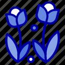 flora, flower, nature, rose, spring