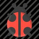 animal, beetle, bug, insect, ladybird, ladybug, spring icon