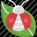 bug, garden, insect, ladybird, ladybug icon