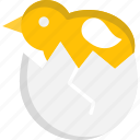 chick, chicken, egg shell, shell icon