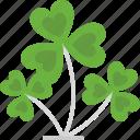 botanical, clover, clover leaf, good luck, luck icon