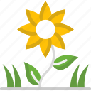 blossom, botanical, garden, gardening, sunflower icon