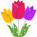 flower, garden, nature, tulip, tulips