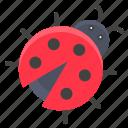 animal, bug, insect, ladybug, nature, spring icon