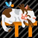 animal, cat, cute, lazy, pet
