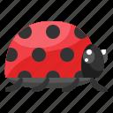 beetle, bug, ladybug, spring, summer icon