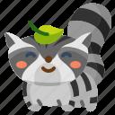animal, cute, raccoon, racoon, wildlife