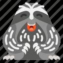 animal, cute, mammal, sloth, wild