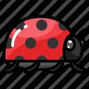 beetle, bug, ladybug, spring, summer
