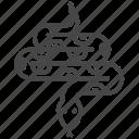 escape, poison, python, snake, st. patrick