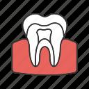 anatomy, dental, dentin, dentistry, enamel, pulp, tooth icon