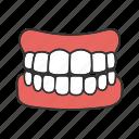 dental, fake, gum, human, jaw, orthodontology, teeth