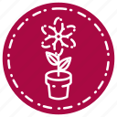 flower, knowledge, learning, school, study icon