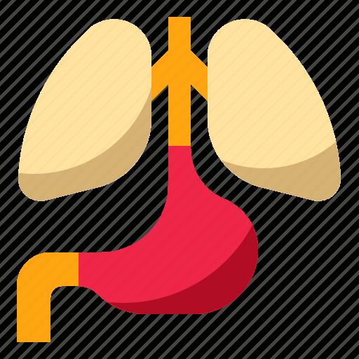 anatomy, body, health, human, lung icon