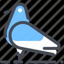 bird, pigeon