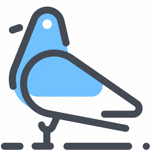 bird, pigeon icon