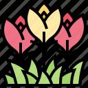 flora, flower, garden, nature, plant